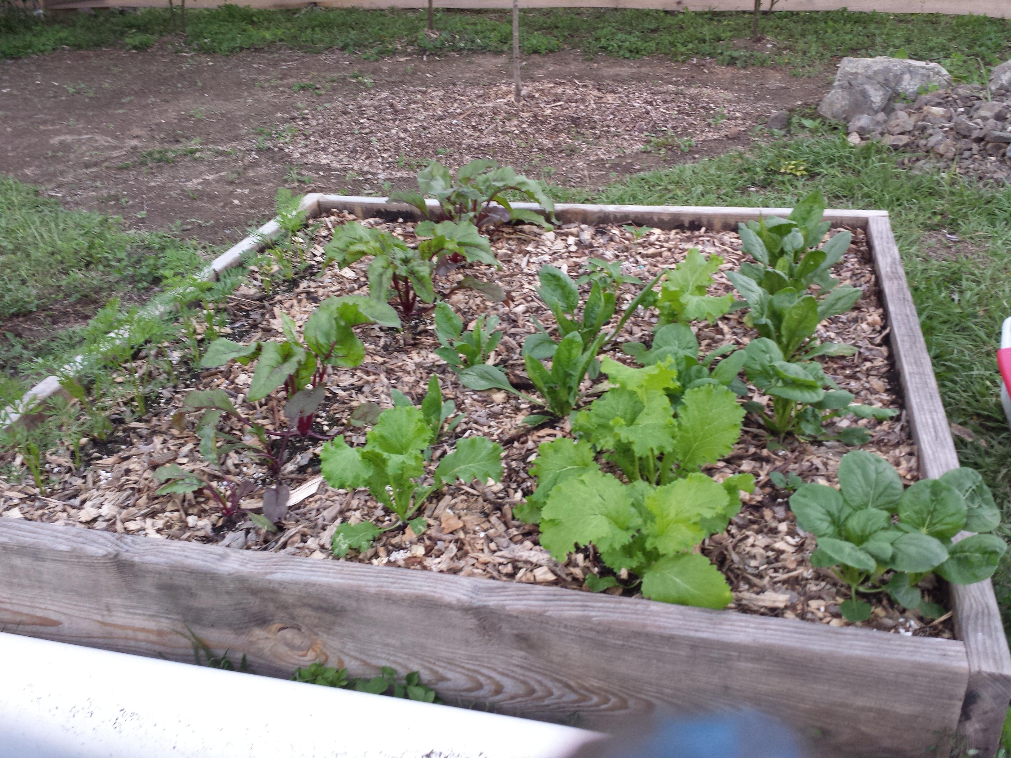 Que es un huerto huerto pr for Que plantas se siembran en un huerto
